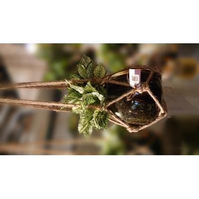 glazen hangpot met zijdehangplant