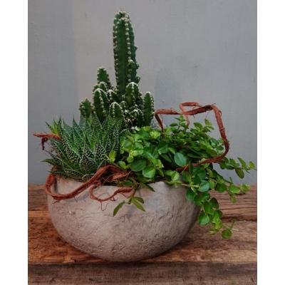 Plantenarrangement